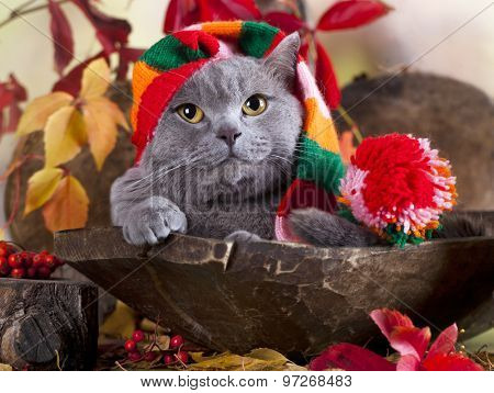 cat in gnome hat
