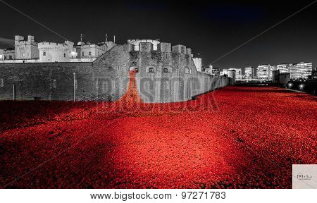 The Tower of Red Poppy