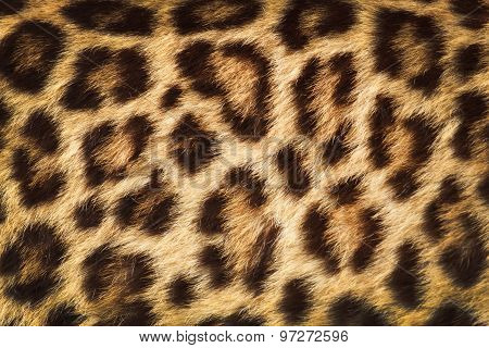 Detail  Skin  Of  Leopard