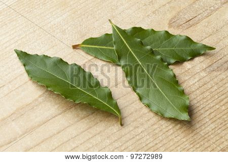 Fresh picked green bay leaves