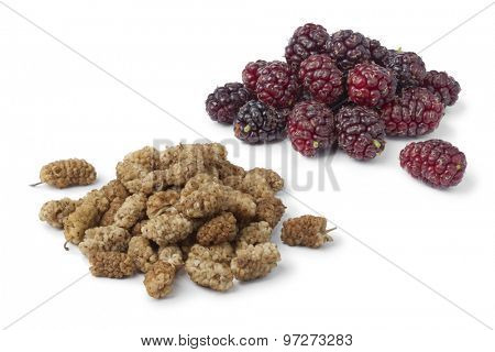 Dried and fresh mulberries on white background