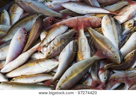 Various Types Of Fish On The Market