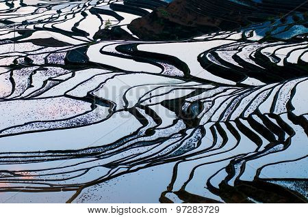 Terraced rice field in water season in YuanYang, Yunnan, China