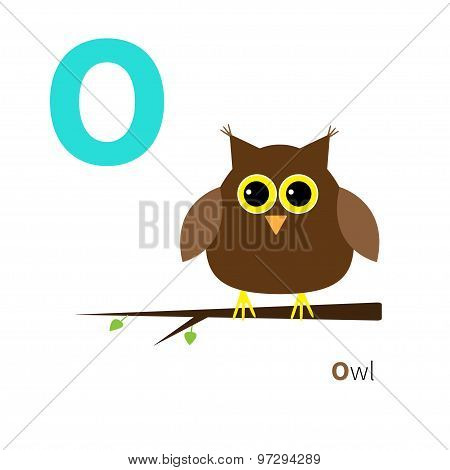 Letter O Owl Zoo Alphabet. English Abc With Animals Education Cards For Kids Isolated White Backgrou