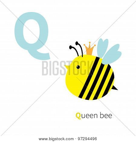 Letter Q Queen Bee Zoo Alphabet. English Abc With Animals Education Cards For Kids Isolated White Ba