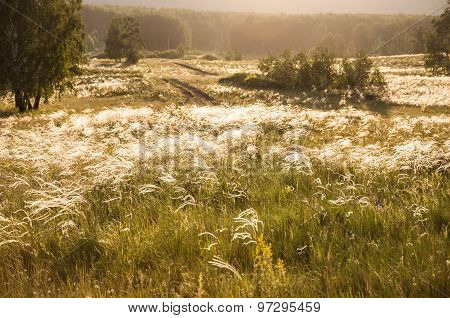 Field With Wild Grasses At Sunset.