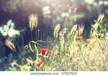 Forest Meadow With Wild Flowers And Herbs.