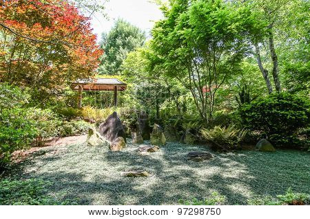 Groundcover In Japanese Garden