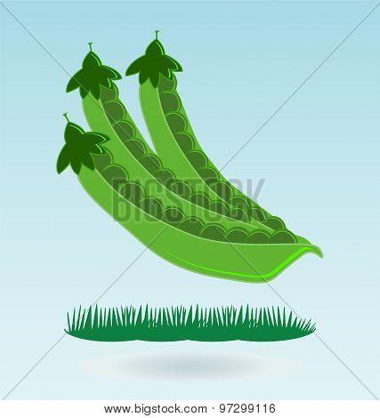 Pods Of Green Peas, Grass Concept