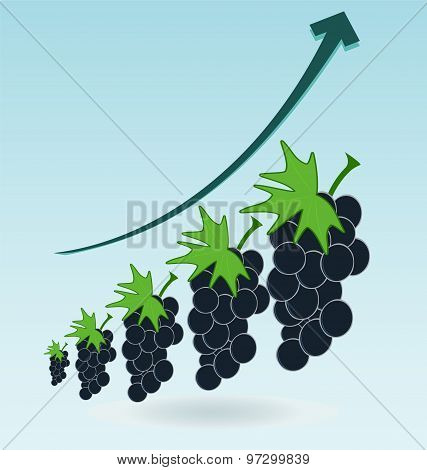Bunch Of Grapes, Growth Chart
