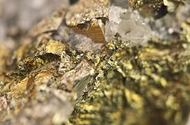 picture of fool  - Golden pyrite fool - JPG