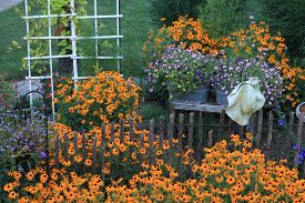 foto of black-eyed susans  - Black Eyed Susans in garden with hat hanging on fence - JPG
