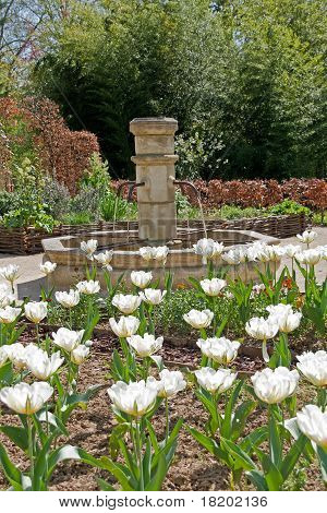 white tulips and fontaine