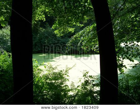 Pond Between Two Trees