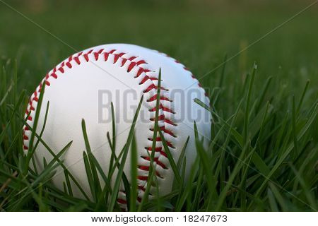 Baseball Sitting in Green Grass