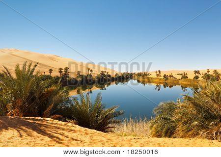 Umm Al-ma Lake - Desert Oasis, Sahara, Libya