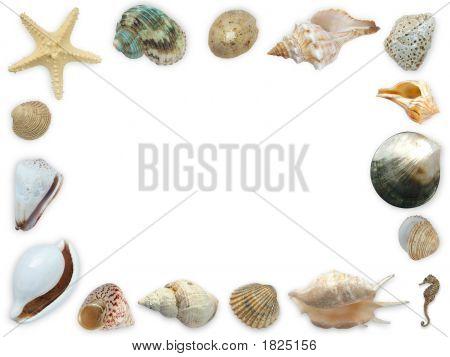 Seashell Framework