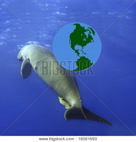 Dugong And Globe