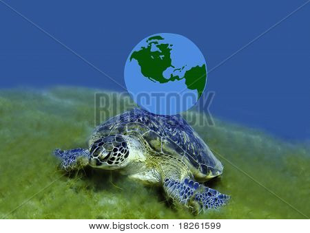 Green Turtle And Globe