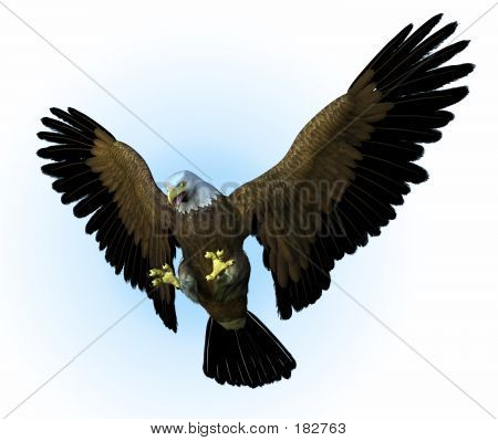 Eagle Swooping Down