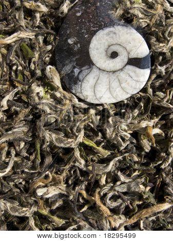 White tea - chinese baicha