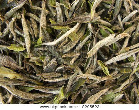 White Tea - Pai Mu Tan