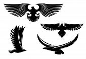 foto of hawk  - Heraldry eagle symbols and tattoo isolated on white - JPG