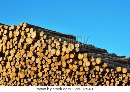 Heap Of Timber Logs