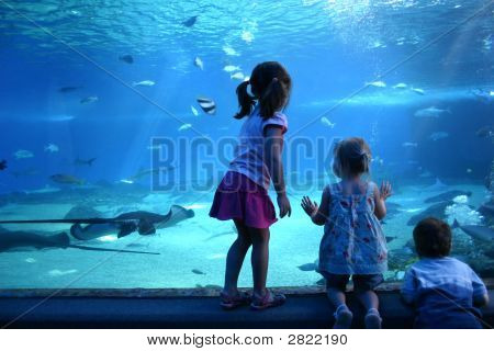 A Day At The Aquarium
