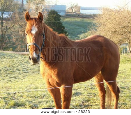 Red Mare