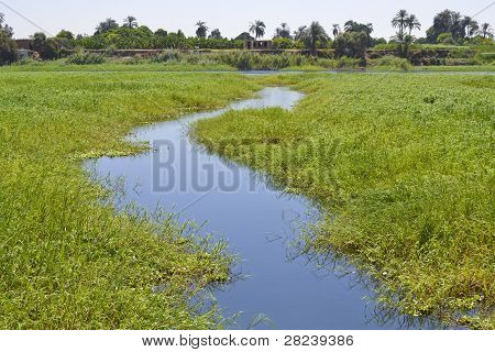 Small Stream Through Marshland