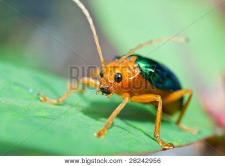 Bombardier Käfer