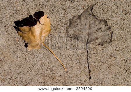 Leaf And Cement
