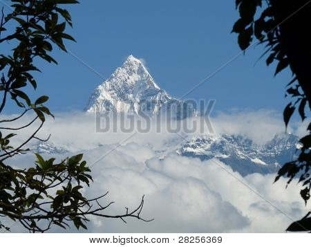 Snowcovered peak of Fishtail mountain, Annapurna Range, framed by branches