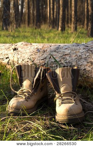 Hiking Boots On The Clearing In Pine Wood