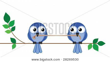 Bird worm fight