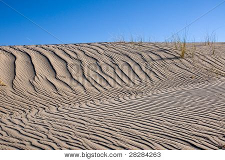 Sand dune with same marram grass
