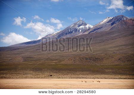 Highlands Plain