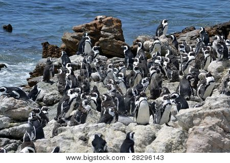 Penguins On The Coast