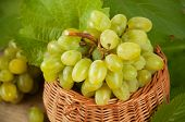 Ripe Grape Cluster Of White Grapes In A Basket With Green Leaves Of Grapes. Vintage Grape Berries. poster