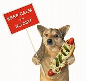 The Funny Dog Holds A Big Hot Dog And A Sign. Keep Calm And No Diet. Isolated. poster