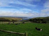 Image of ranch landscape.