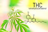 Cannabis Of The Formula Cbd Thc. Chemical Formula Of Cannabidiol And Tetrahydrocannabinol. Molecular poster