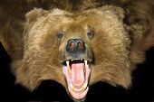 Grizzly Bear Pelt poster
