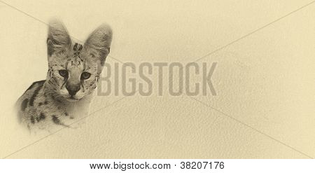 Sepia Toned Serval With Text Card Banner