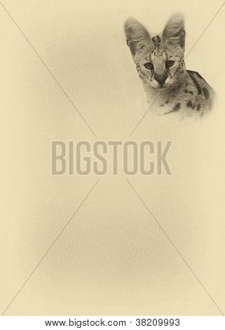 Sepia Toned Large Serval With Text Page