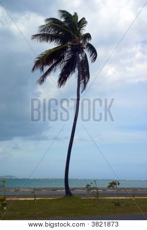 Single Palm Tree In Wind Vertical
