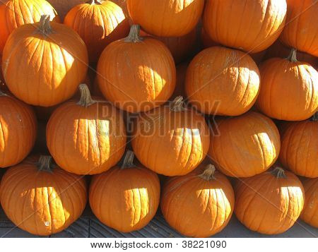 sunny pumpkin wall