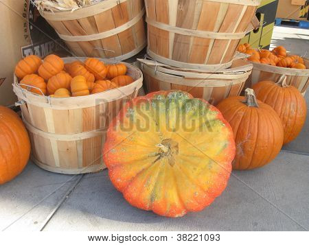 group of pumpkins and baskets