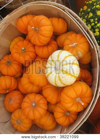 a closeup of a basket of tiny pumpkins